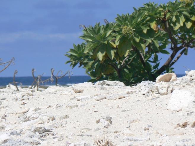 coral reef beach