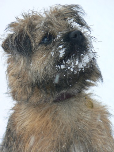 b-in-snow
