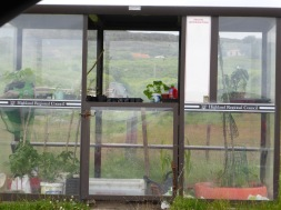 bus-stop-greenhouse