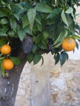 des-oranges