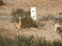 desert-towers-and-deer
