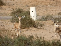 desert-towers-and-deer