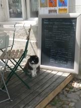 grumpy-cat-with-menu
