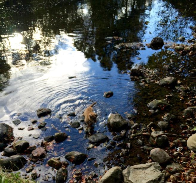 imgb-paddling_7031