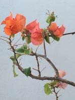 kl-flowers