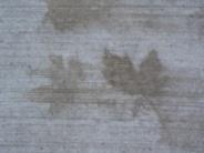 leaf-ghosts