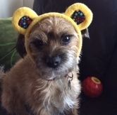 looking-cross-with-pudsey-ears