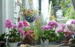 mams-flowers
