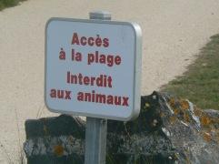 no-animals-on-beach