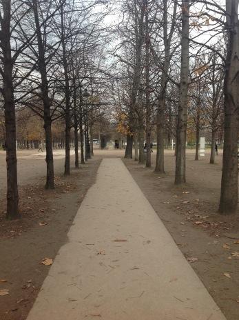 paris-trees
