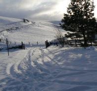 snowy-hawick