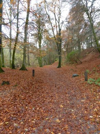 leaf-carpet-birks