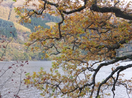 oak-leaves-loch-lomond