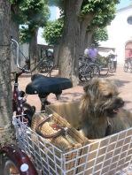 b-in-trike-basket