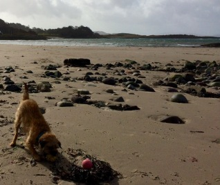 bramble on the beach