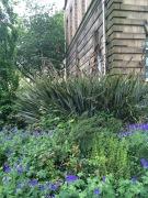 edinburgh garden