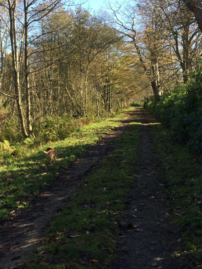Bridgend woods